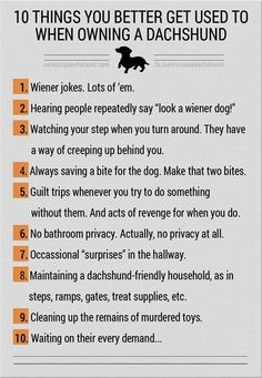 the rules and requirements for owning a doxie.     lj