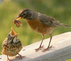 birds with their babies - Yahoo Image Search Results