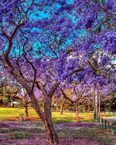 90 Best Brisbane & Queensland images in 2018   Brisbane