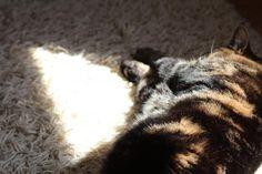 Rasputin enjoying the sunshine - from paperbagblog