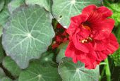 Organic Flower Seeds Online