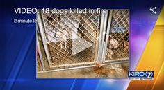 This Sunday, January 15th, the Olympia communitywill haveCandlelight Vigil for the dogs that died in a January 5 fire at Furever Homes Dog Rescue. Three mother dogs and their fifteen puppies died of smoke inhalation. Twenty dogs survived. Thurston Countyresident can have up to three dogs. Anyone that has more is supposed to get a …