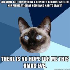 #Chronic Illness #cat #chronic illness cat #disability #health #funny