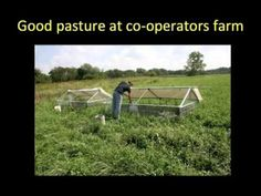 A Novel Nutritional Approach to Rearing Organic Pastured Broiler Chickens using naked oats, a webinar
