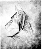 Horse Silhouette Print A3 Size 297cm X 42cm 1175inches 165inches