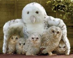 Owl be here for you