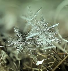 Snowflakes Photography - Nature man! No wonder the Inuit have so many names for snow go check out all of these.