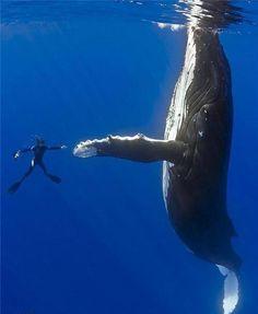 Questionador: Por que sempre há morte e sofrimento no equilíbrio da natureza?  Krishnamurti: Por que o homem matou cinquenta milhões de baleias? Cinquenta milhões — vocês entenderam? E ainda continuamos matando todo o tipo de espécies — os tigres, os chitas, os leopardos e os elefantes estão se extinguindo — eles são mortos pela sua carne, pelas suas presas; vocês conhecem o fato. Não será o homem um animal muito mais perigoso do que o resto dos animais? E vocês querem saber por que há morte…