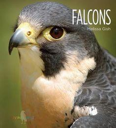 Falcons, Melissa Gish, 9781608185665, 11/19/15