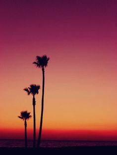 Palm and ombre colored sky...