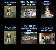 This is so me...lol #babygoatfarm