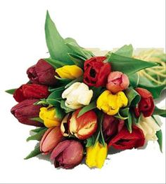 Celebrate Easter with the Tulips Gift Wrapped from Brant Florist online worldwide florist. Same day delivery to USA and Canada Easter Flowers, Spring Flowers, Online Florist, Floral Arrangements, Beautiful Flowers, Floral Wreath, Bouquet, Gift Wrapping, Valentines