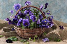 basket of pansies
