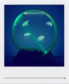 Capitolo 34 (Tentacoli) http://farefuorilamedusa.com/2014/01/02/34-tentacoli/ #medusa #medusa #acquario #acquarium