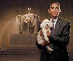 President Obama with 3 legged rescue Bichon, Baby. Awwww.