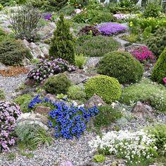 Stepping Stones, Backyard, Outdoor Decor, Plants, Oasis, Home Decor, Ideas, Homemade Home Decor, Yard