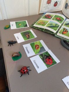 Diy And Crafts, Crafts For Kids, Cycle, Gift Wrapping, Gifts, Montessori, Blog, Zoology, Ladybug