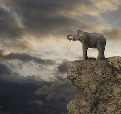 Elephant On The Edge Of A Cliff Artwork: #21811 of 43559 by John Lund
