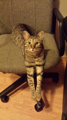 Req Cat | Pawshake Leuven