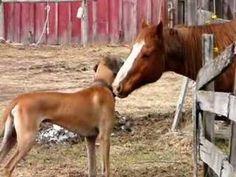 Un perro y un caballo, tan amigos