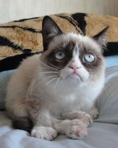 ❥ Tard, the Grumpy Cat {LOVE}