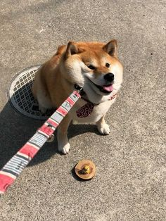 16 Reasons Why Shiba Inu Dogs Might Conquer the World Cute Little Animals, Cute Funny Animals, Funny Dogs, Cute Cats, Cute Puppies, Dogs And Puppies, Corgi Puppies, Cute Creatures, Animal Memes