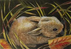 Fall Bunny Rabbit Miniature Art by Melody Lea Lamb ACEO Giclee Print #145