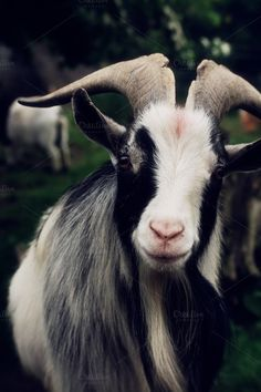 Check out Goat by Neo Ink Design on Creative Market Farm Animals, Photo Props, Goats, Animals Photos, My Arts, Ink, Portrait, Creative Products, Design