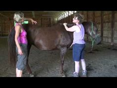Chris Powell - Healing Touch for Animals July 5, 2013 - YouTube