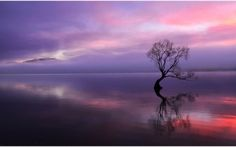 Sunset tree in water