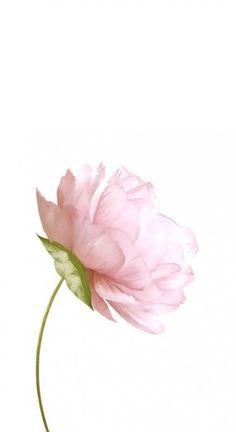 - Wallpaper World Flower Background Wallpaper, Flower Backgrounds, Wallpaper Backgrounds, Iphone Wallpaper, Background Noise, New Flower Wallpaper, Watercolor Wallpaper Iphone, Background Drawing, Background Vintage