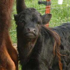 26 Best Hog Waterers Feeders Images Hog Waterer Pig Farming Farm Animals