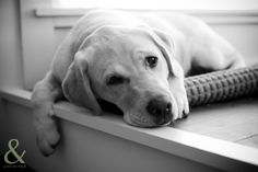 """""""Until one has loved an animal, a part of one's soul remains never awakened.""""-Anatole France"""