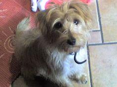Ciao cucciolotta » Fbsocialpet.com: il social forum per cani, gatti, cavalli, tutti gli animali