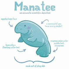 "Cute ""scientific depiction"" of the Manatee :)"
