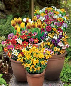100 Spring Flowering Bulbs product photo