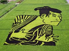 Amazing Artworks Created in Japanese Rice Field