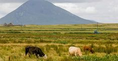 Cattle used to be the mainstay of the Achill's economy, but then, in the 19th century, sheep, easier to breed, became more popular. County Mayo, Natural Beauty, Ireland, The Past, Scenery, River, St Michael, Mountains, Landscape