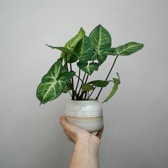 #gres #stoneware #green #botanical #plantlove #pottery #planter #plantpot #plantlover #ceramicsmagazine #ceramiclicious #mostera #ceramics #potterywheel #handmade #wheelthrown #wheel