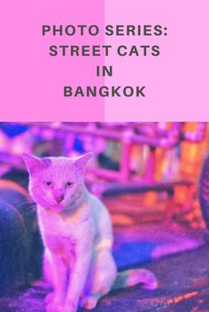 The tough life of street cats in Bangkok, Thailand, is well-portrayed in this feline photo series: http://www.traveling-cats.com/2014/02/cats-of-bangkok-thailand.html (street cats Bangkok, street cats Thailand, grumpy cat photos, feline photos, pink cats)