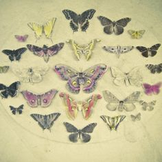 Poster | BUTTERFLIES AND MOTHS von Cassia Beck | more posters at http://moreposter.de