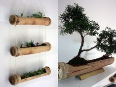 Decorating our room with plants and bamboo vase - Alles über den Garten Bamboo Planter, Bamboo Art, Bamboo Crafts, Bamboo Garden, Bamboo Ideas, Garden Web, Tiki Bars, Deco Jungle, Bamboo Building