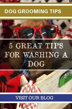 Dog Grooming Tips at Home -- Continue with the details at the image link. #DogGroomingTips #doggroomingathome
