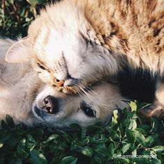 Want to reduce your pet's environmental footprint? The book 'Greening Your Pet Care' offers practical animal care advice to help eco-conscious pet owners. Cat Ideas, Game Mode, Son Chat, Mosquitos, Dog Training Tips, Training Kit, Training Academy, Training Classes, Training Videos
