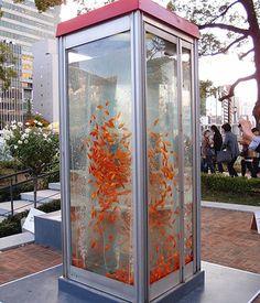 Goldfish Phone Booth Aquarium!