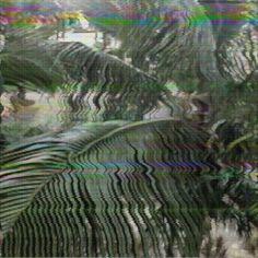 plantes écran tv