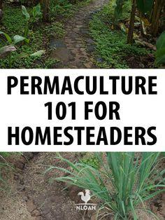 permaculture 101 pinterest