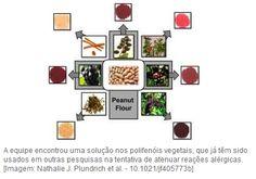 Farmacêutica Curiosa: Uma farinha para tratar alergias alimentares