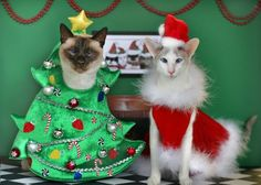these 18 cats hate christmas and we cant blame them their owners dress them up in costumes and then they put up christmas trees a cats main nemesis