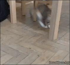Para alegrar seu dia, mais um Dia de Gato!